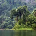 Tropical rainforest — Stock Photo #22858362