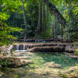 Lianas in the rainforest. Erawan National Park in Thailand — Stock Photo