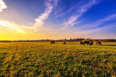 Beautiful rural landscape — Stock Photo