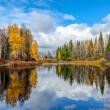 Nice autumn landscape with forest lake — Stock Photo #31748999