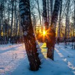 Sunset in winter forest — Stock Photo #31749547