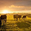 Rural landscape with grazing horses on pasture at sunset — Stock Photo