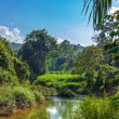Tropical Landscape — Stock Photo #31749553