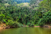 Rainforest — Stock Photo