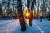 Sunset in winter forest — Stock Photo