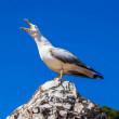 Stock Photo: Screaming seagull on background of blue sky close-up
