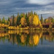 Autumn evening in wild Siberian taiga — Stock Photo
