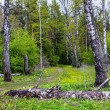 Spring landscape with forest. — Stock Photo