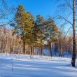 Evening in the winter forest — Stock Photo #34847999