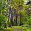 Spring Forest. — Stock Photo