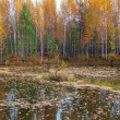 Stock Photo: Autumn landscape. Lake of the Woods.
