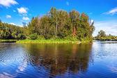 Povaha sibiře v letní slunečný den — Stock fotografie