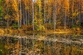 Mooie herfst landschap — Stockfoto