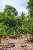 Floresta tropical — Foto Stock