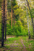 Forêt de printemps — Photo