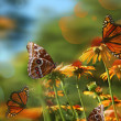 Summer Butterfly Background — Stock Photo