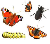 Collection of insects — Stock Photo