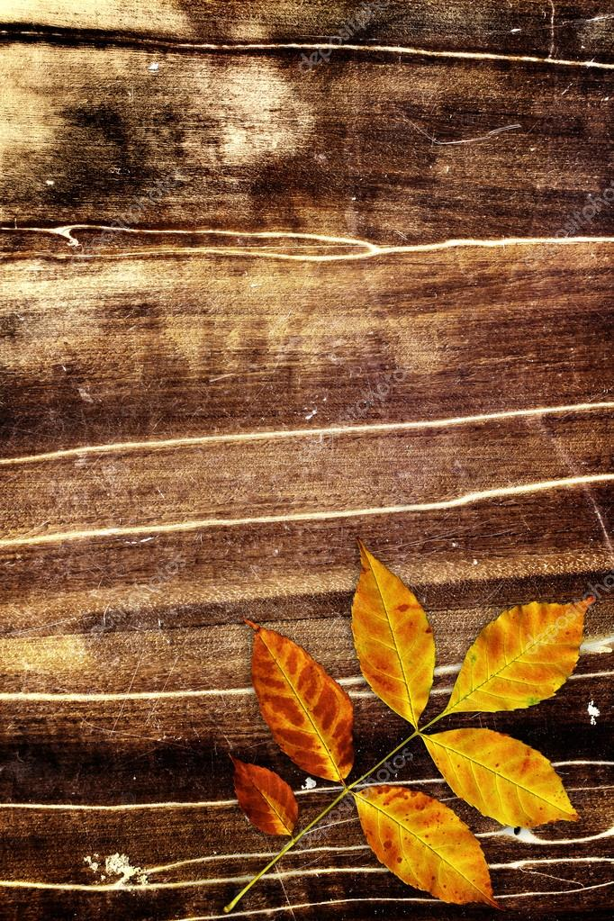 Grunge background with autumn leaf — Stock Photo #12870699