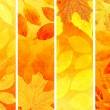 Collection of autumn banners - Stock fotografie
