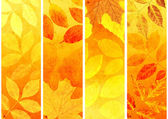 Collection of autumn banners — 图库照片