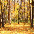 autumn forest — Stock Photo #13878188
