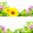 Royalty-Free Stock Photo: Frames with summer flowers