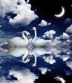 Two swans — Stockfoto