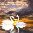 Stock Photo: Two swans