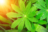 Rain drops on a green leaves — Stock Photo