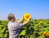Elderly farmer and sunflowers — Stock Photo