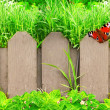 Wooden fence, flowers and green grass — Stock Photo