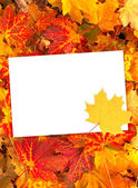 Background with autumn leaves and paper — Stock Photo