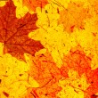 Grunge background with autumn leaves — 图库照片