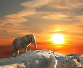 Elephant at sunset — Stok fotoğraf