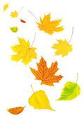 Hojas de otoño volando — Foto de Stock