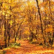 autumn forest — Stock Photo #34801329