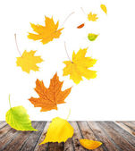 Flying autumn leaves — Stock Photo