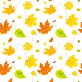 Fondo transparente con hojas de otoño de vuelo — Foto de Stock