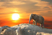 Elephant at sunset — Stockfoto