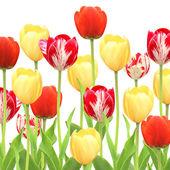 Tulpen — Stockfoto