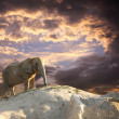 Stock Photo: Elephant at sunset