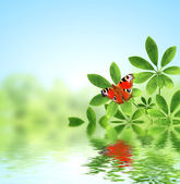 Green leaves and butterfly — Stock Photo
