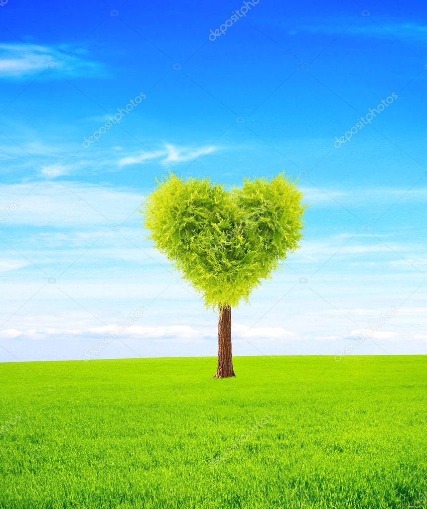 心形状树在绿色的田野