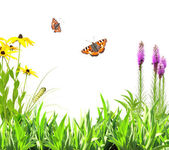 Summer flowers, green leaves and insect — Stockfoto