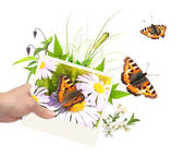 Summer frame with photo, green leaves, flowers and insects — Stock Photo