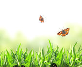 Green grass and butterflies — Stock Photo