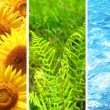 Set of banner with nature elements — Stock Photo #43955365