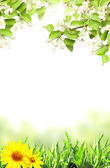 Flowers of apple and green grass — Stock Photo
