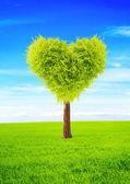 Hjärta form träd — Stockfoto