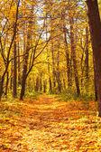 осенний лес — Стоковое фото